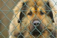 Hund_Tierheim(mittelgroß)