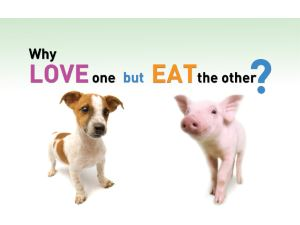 Hund und Schwein